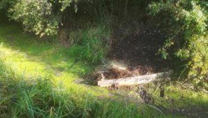 Diversification des écoulements – Nied du Bischwald à Lixing les Saint-Avold