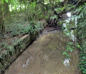 Ruisseau d'Aube – Commune de Beux - Etat initial (chenal anthropique et fond banalisé)